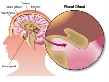 Third Eye = Pineal Gland